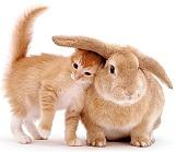 Символ 2011 года: кот и кролик
