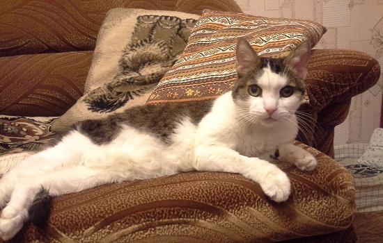 Это мой кот Мурзик